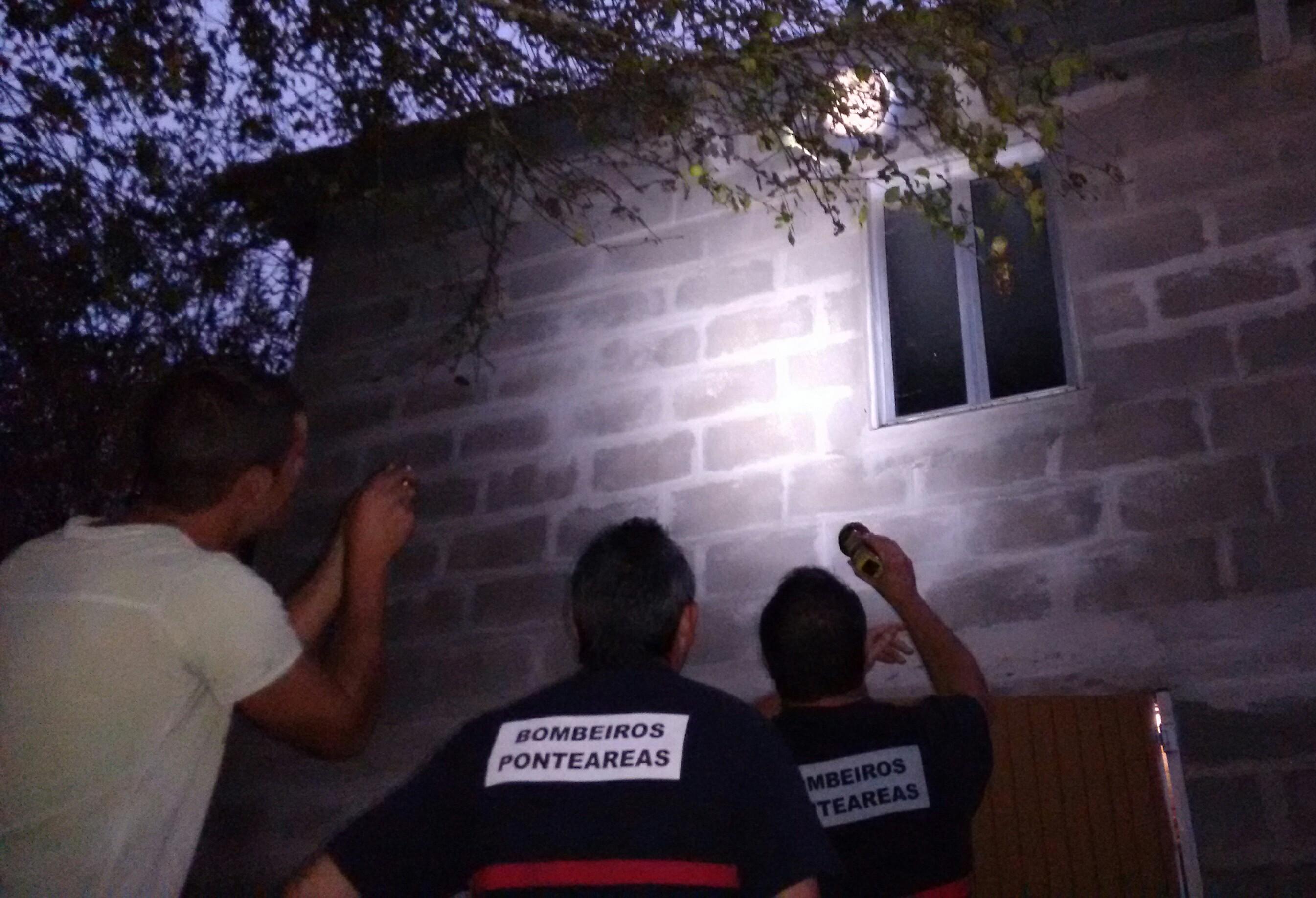 Retiran un niño de vespa asiática en Pazos (Guillade)